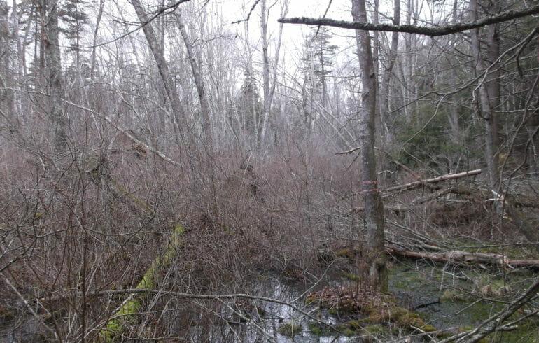 Oates Cedar Swamp