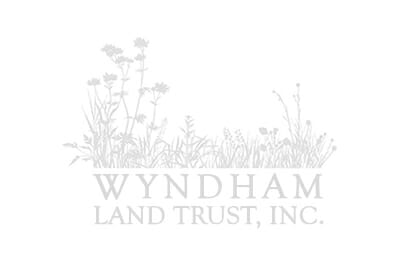WLT Logo Watermark