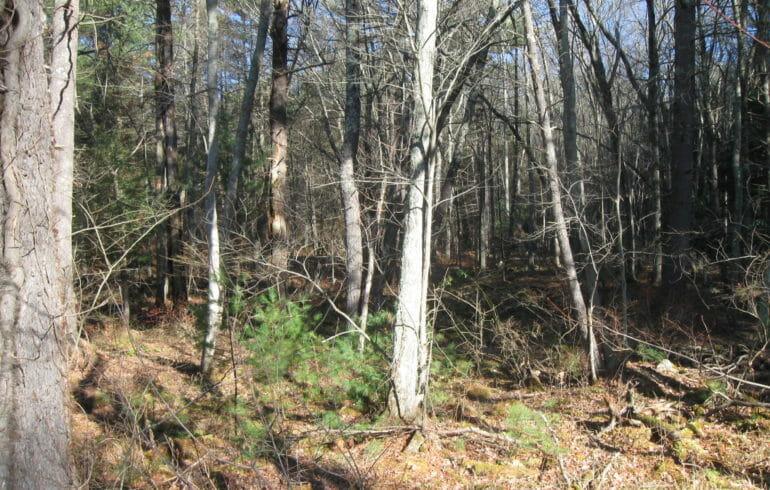 Hayden woods